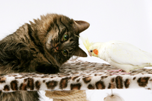 sm cat & bird