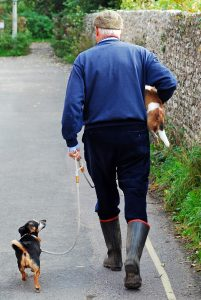 dog-attentively-walking-on-leash-with-man