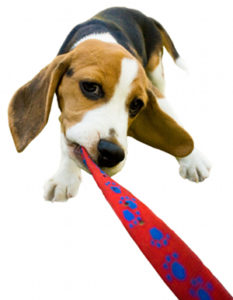 Dog Leash walking skills