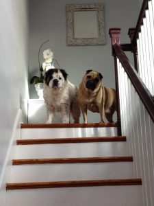 Miles and Mabel dog sitting review