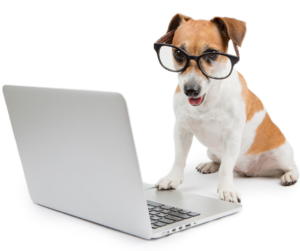 Dog wearing glasses logging onto client login from lap top
